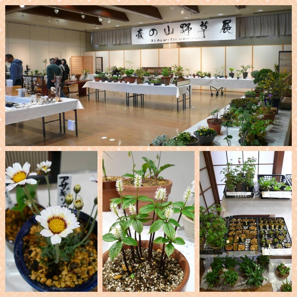 「春の山野草展」開催のお知らせ