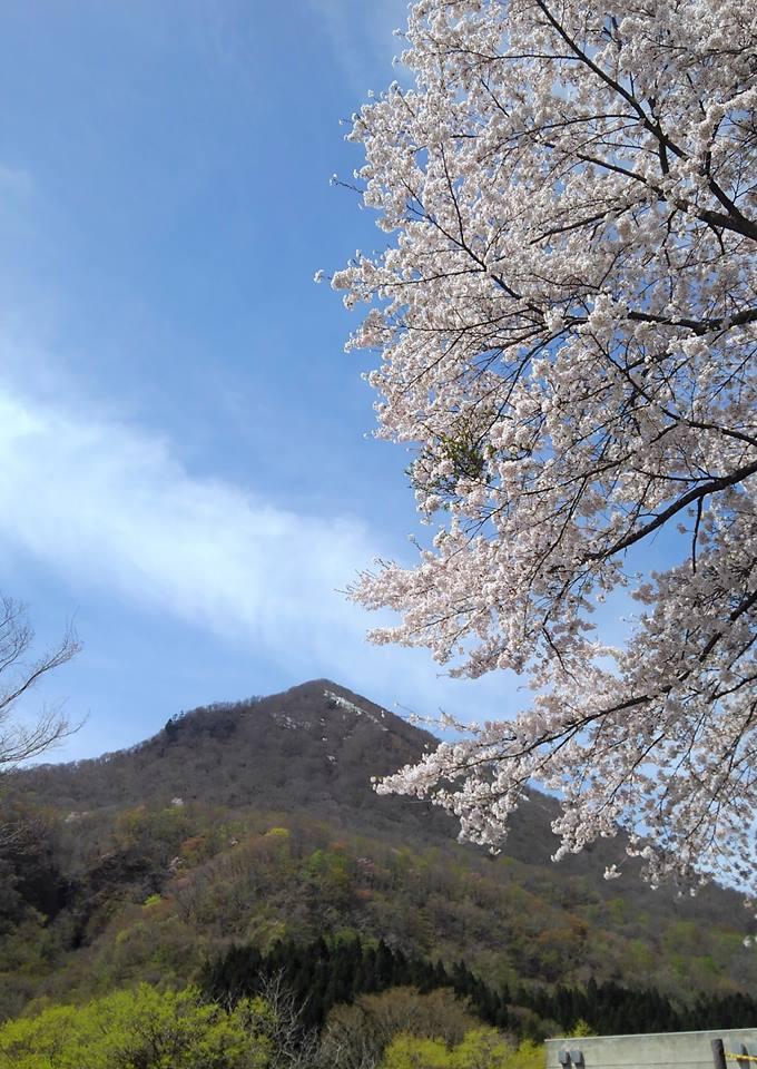 現在、二口峡谷は桜が満開!!